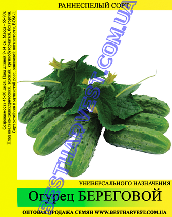 Семена огурца Береговой 5 кг (мешок), фото 2