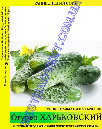 Семена огурца Харьковский 0,5кг, фото 2