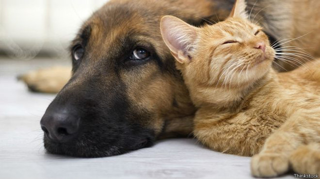 Почему мы так любим домашних животных ?