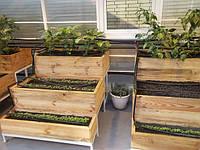 Новые технологии в выращивании теплиц