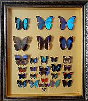 """Картина из бабочек """"Сине-Голубая"""""""