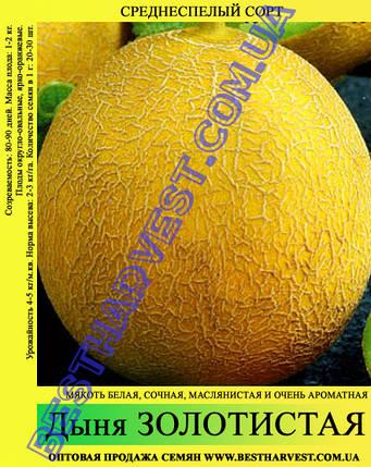 Семена дыни Золотистая 10кг, мешок, среднеспелая, фото 2