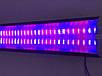 Світлодіодний фитосветильник SL-36F 36W IP20 лінійний (fito spectrum led) Код.59208, фото 2