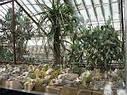 Оранжереи, фото 7