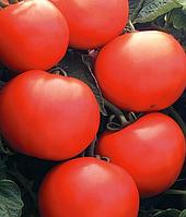 Томат Debut F1 (Дебют F1) - Seminis (Семинис), уп. 1000 семян (детерминантный)