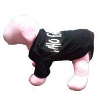 Doggyduds WHO FARTED футболка, одежда для собак, M