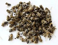 Пчелиный подмор сухой 40грамм