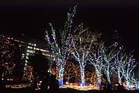 Новогоднее украшение и оформление деревьев светодиодными гирляндами. LED гирлянда на деревья ЛУЧ-3