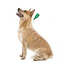 БИО Капли от блох и клещей Beaphar Veto pure для собак свыше 30 кг (цена за упаковку 3 шт), фото 2