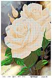 Схема для вышивки бисером Розы, фото 2