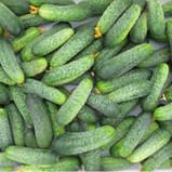 Семена огурцов Аваланж  F1 10 шт. самоопыляемый NongWoo Bio, фото 2