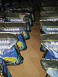 Семена подсолнуха Меркурий ИМИ под Евро Лайтинг/насіння соняшника Меркурій, фото 2