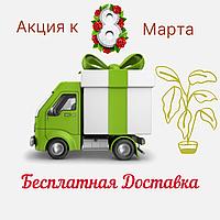 """Акция к празднику 8 марта от садового центра """"НАТАЛКА"""""""