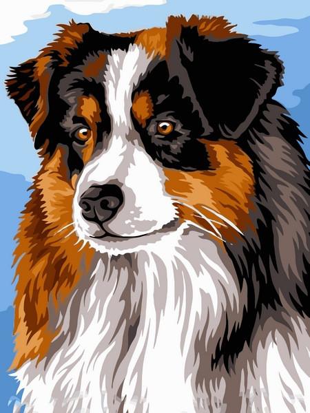 Картина по номерам Австралийская овчарка, 30x40 см., Babylon