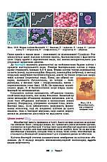 Біологія та екологія 10 клас. Підручник. Остапченко Л. І., фото 3