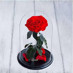 Стабилизированная роза в колбе Lerosh - Lux 33 см, раскрытая Красная SKL15-138946