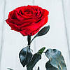 Стабилизированная роза в колбе Lerosh - Premium 33 см, Красная SKL15-138931, фото 3