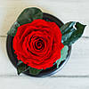 Стабилизированная роза в колбе Lerosh - Premium 33 см, Красная SKL15-138931, фото 4