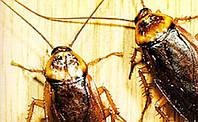 Поговорим о тараканах.