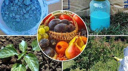 Все, что нужно знать про обработку растений медным купоросом