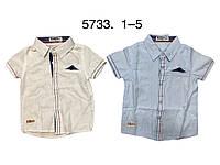Рубашки на мальчика оптом, Buddy Boy, 1-5 лет,  № 5733, фото 1