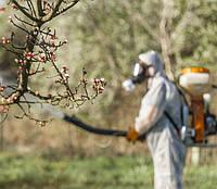 Чем обработать растения в саду весной для защиты урожая от болезней и вредителей!