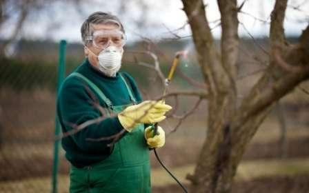 препараты для обработки растений весной, защита урожая