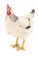 Премикс для молодняка кур (9 нед. и старше) ПМК-2 – 1 %