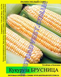 Насіння кукурудзи «Брусниця» 1 кг