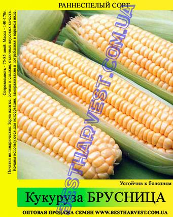 Семена кукурузы «Брусница» 25 кг (мешок), фото 2