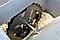 Гидравлический брикетировщик F70 Cormak, фото 8