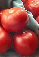 Томат Florida 47 F1 (Флорида 47 F1) - Seminis (Семинис), уп. 1000 семян (детерминантный)