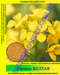 Семена Горчица желтая 1 кг
