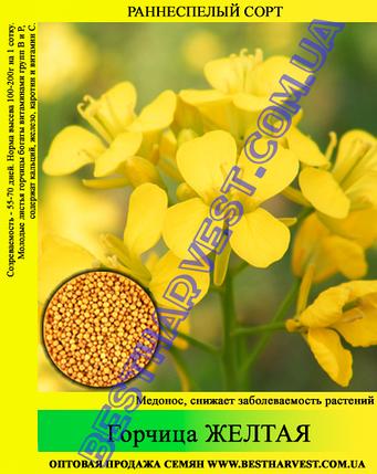 Семена горчица Желтая 25 кг (мешок), фото 2