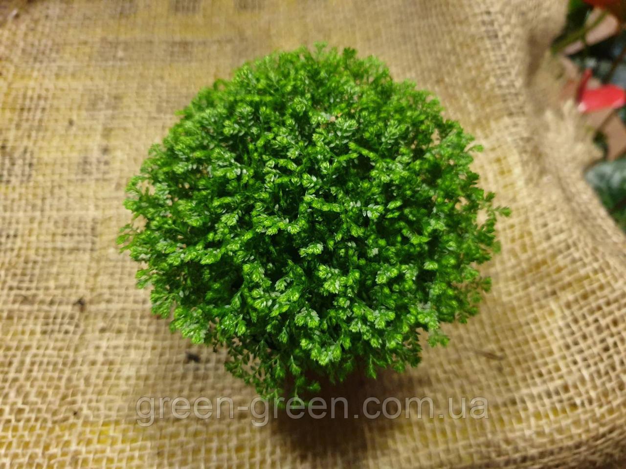 Селагинелла зеленая