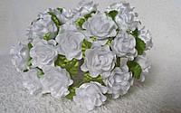 Роза кучерявая белая