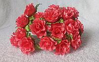 Роза кучерявая кораловая