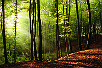 Фотообои флизелиновые 3D Природа 375х250 см Карпатский лес (MS-5-0098)