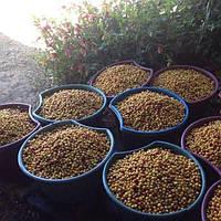 Кава Ethiopia Sidamo (Ефіопія Сідамо)
