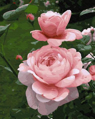 Картина по номерам Нежность GX34173 40x50см. Brushme, фото 2