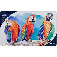 Олівці кольорові Kite Птахи акварельні 36 кольорів  мет. пенал