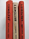 Taschenbuch der Anatomie Анатомия в 3-х томах Немецкий язык, фото 2