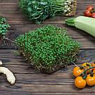 Набор для выращивания микрозелени в домашних условиях. Горох, Редиска, Кресс-салат, фото 5