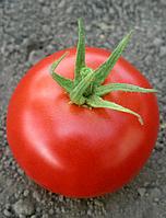 Томат Hilario F1 (Хиларио F1) - Seminis (Семинис), уп. 500 семян (индетерминантный)