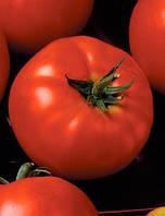 Томат President II F1 (Президент II F1) - Seminis (Семинис), уп. 500 семян (индетерминантный)