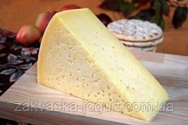 Сыр Тильзитер (10-12 литров) только  закваска