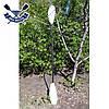 Весло для байдарки двухсекционное TNP Wolferine (подходит для спортивной байдарки, облегченное), фото 4