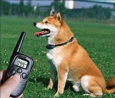 Комплект для тренировки собак Dog Training