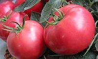 Томат Pandarosa F1 (Пандароза F1) - Seminis (Семинис), уп. 500 семян (индетерминантный)