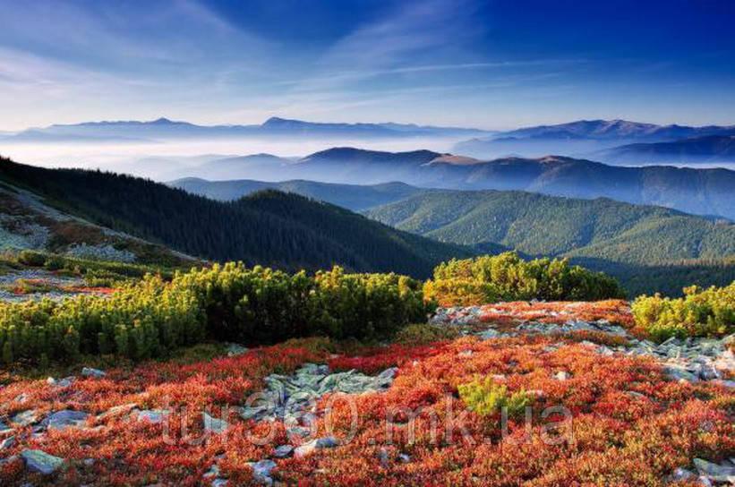 Выходные в Карпатах. Осенний тур:  Карпаты,. Драгобрат + Львов.